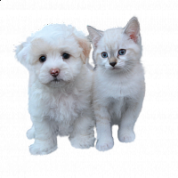 dog-and-cat-free-3484559_1920