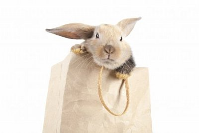 rabbit-in-a-paper-bag